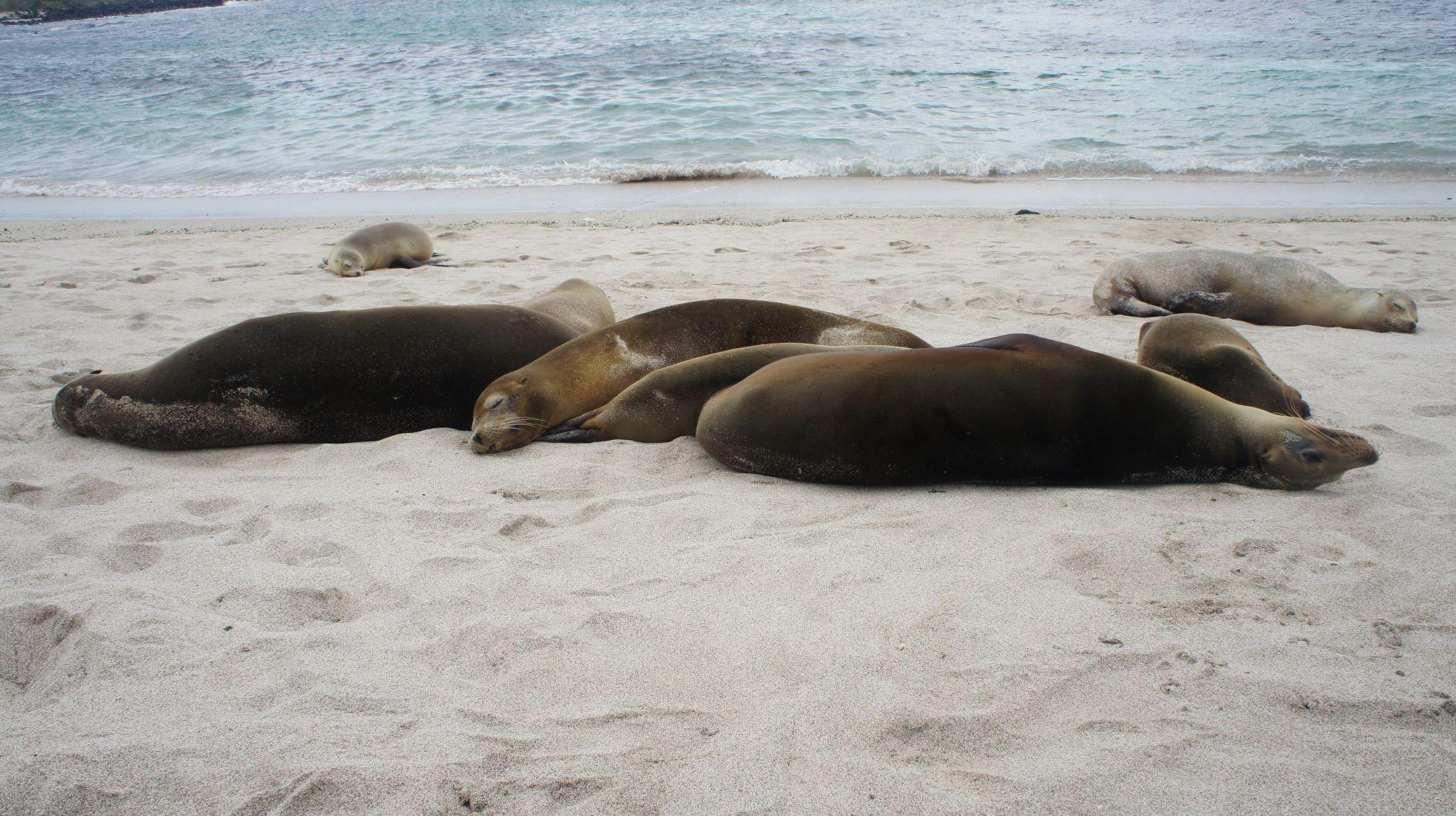 Rencontre avec les phoques dans la Baie de Somme