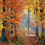5 forêts flamboyantes à découvrir