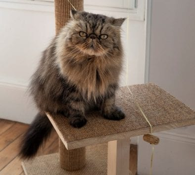 Arbre à chat bricolage