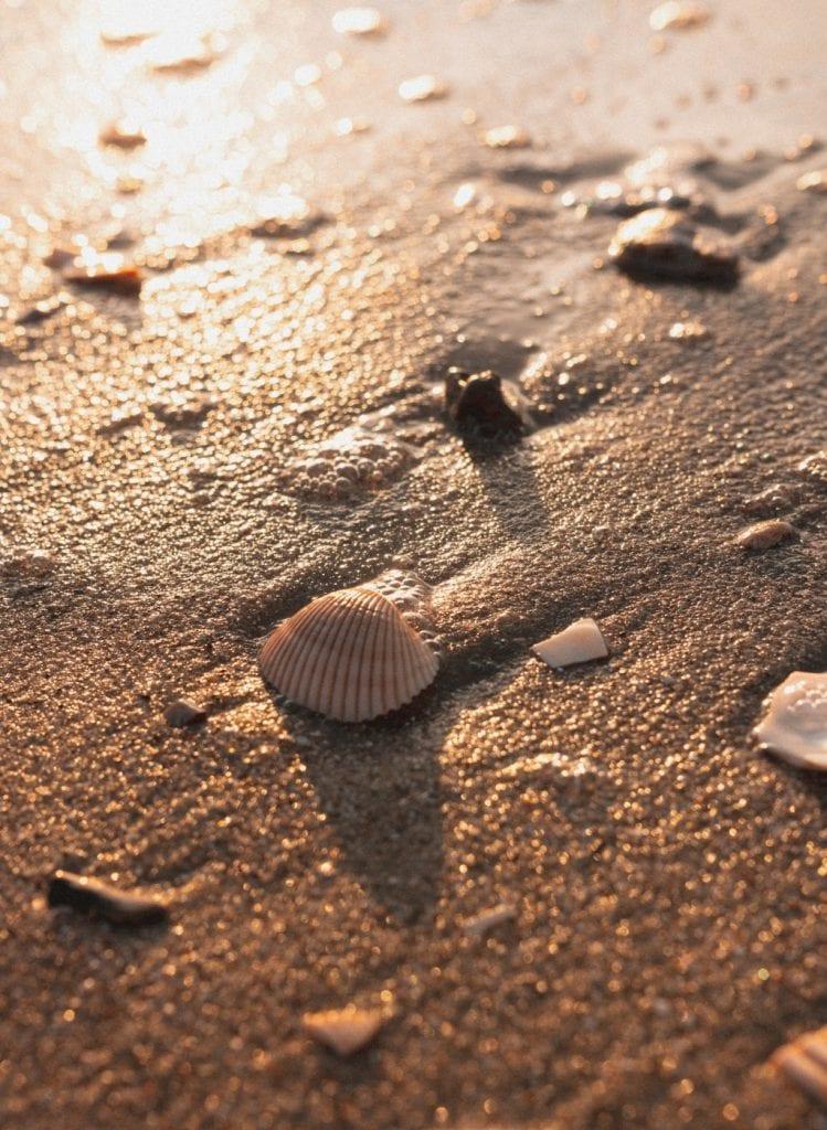 plage coquillage